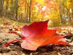 فصل الخريف والوقاية من نزلات البرد